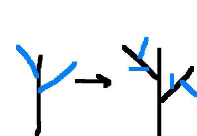[단축분지] 검은색 주축, 파란색 곁축