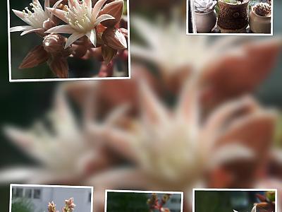 홍휘의 꽃