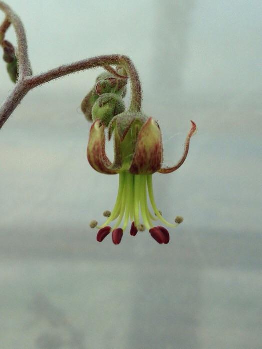초코라인 꽃
