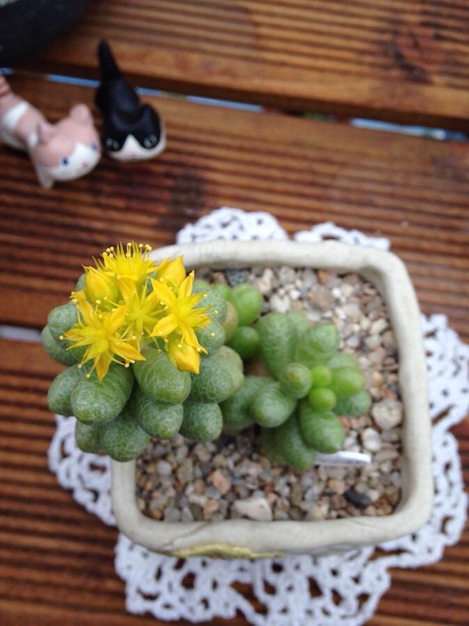 초록이에 노오란꽃이 참 이뻐요