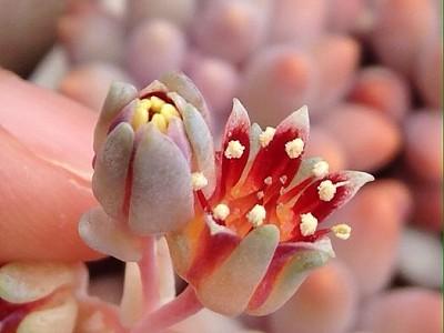 꽃 옆의 손가락은 어른핑거 =ㅅ=;;